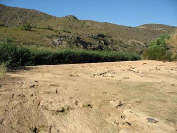 Lamentable estado del río Jalón a su paso por Ricla