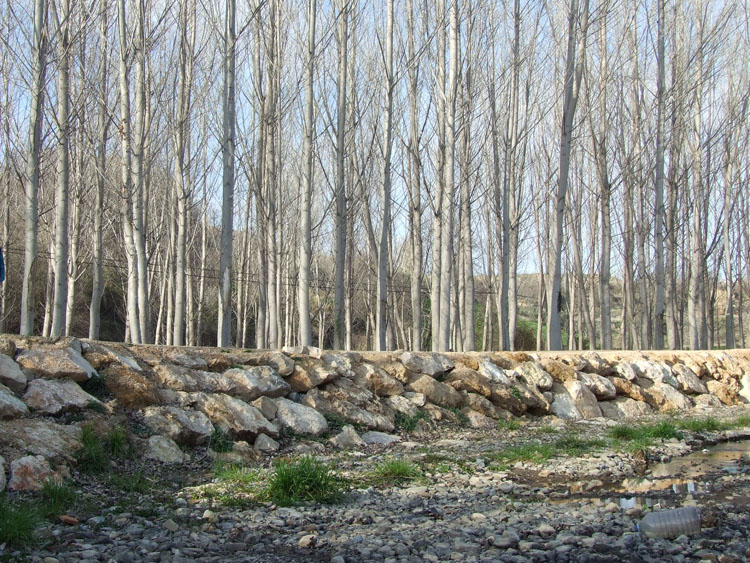 Río Queiles, foto tomada por COAGRET el 3 de marzo de 2013.