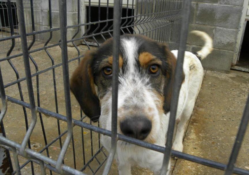 Juventud y Protección Animal organizan actividades de sensibilización contra el maltrato animal