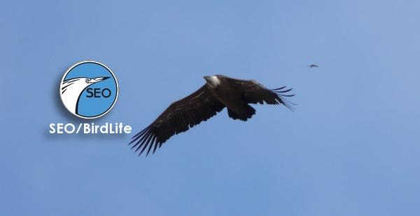 SEO/BirdLife celebra el 60 aniversario de la organización