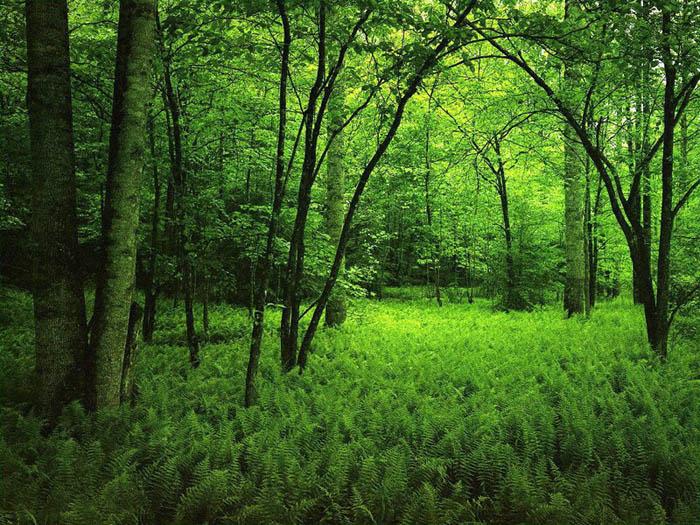 Las masas forestales más desprotegidas con el anteproyecto de ley de montes