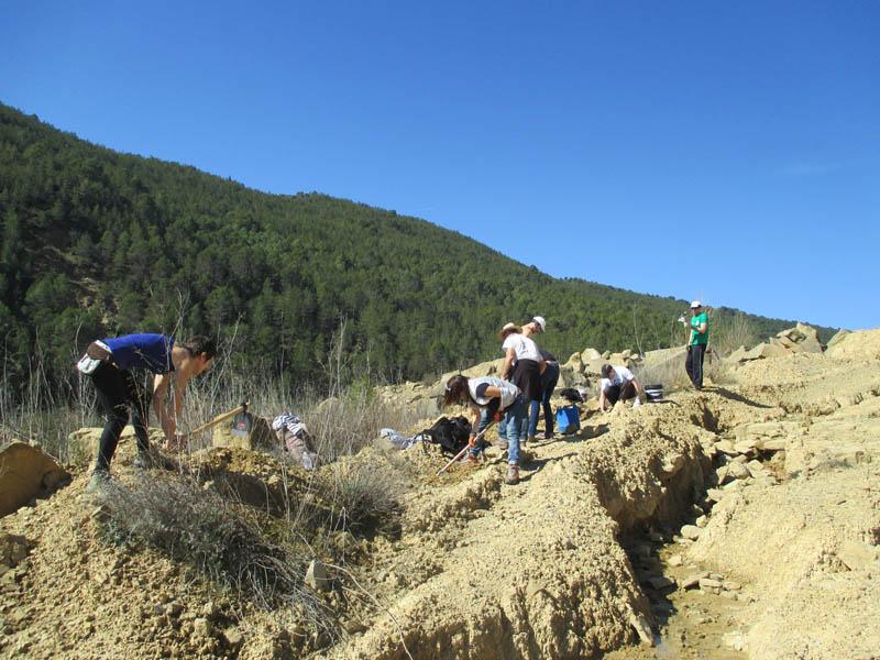 Otro exitoso fin de semana de plantación de Carrascas con la Asociación Gabardiella