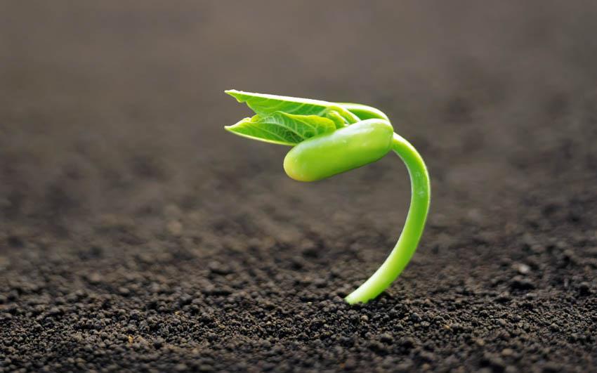 IU: «Consumidores y agricultores deben tener la posibilidad de elegir los alimentos que consumen y las plantas que cultivan»