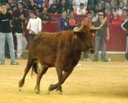 CHA Monzón exigirá que se cumpla estrictamente la legalidad en los espectáculos taurinos