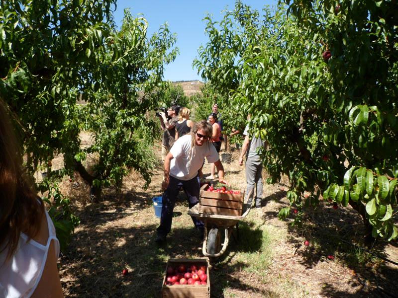 La RSP recoge más de mil kilos de fruta en Fraga que donará a familias y colectivos