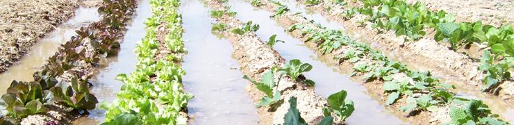 La 'Escuela Agrícola Verde Km0' empieza a brotar este martes
