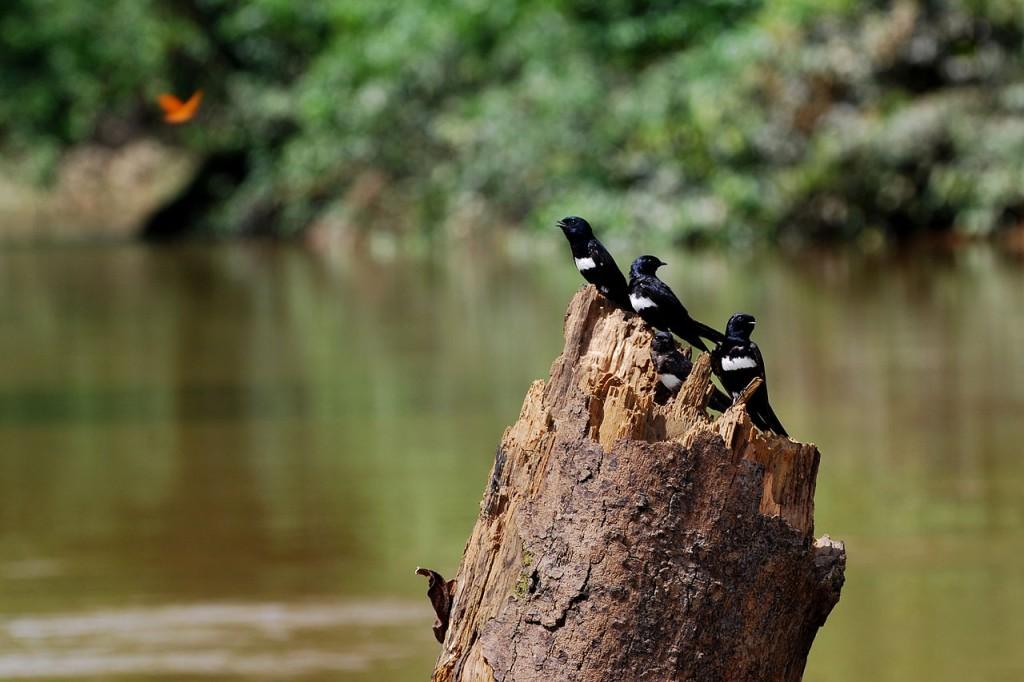 Quedan 900 días para detener la pérdida de biodiversidad