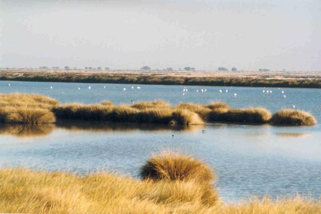 WWF denuncia la falta de protección efectiva en Europa de muchos espacios de la Red Natura 2000