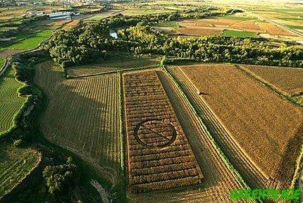 El Estado español vota a favor de cultivar maíz transgénico con gran parte de la UE en contra