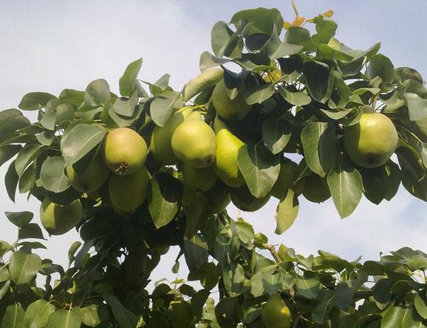 Aplazado el paro de los y las agricultoras de la fruta del 18 de agosto