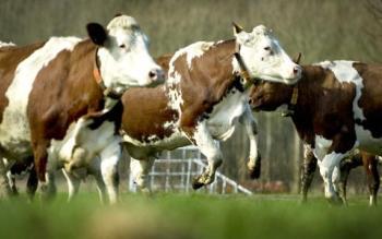 Finaliza la privatización de la corporación agrícola serbia bajo pautas de la UE