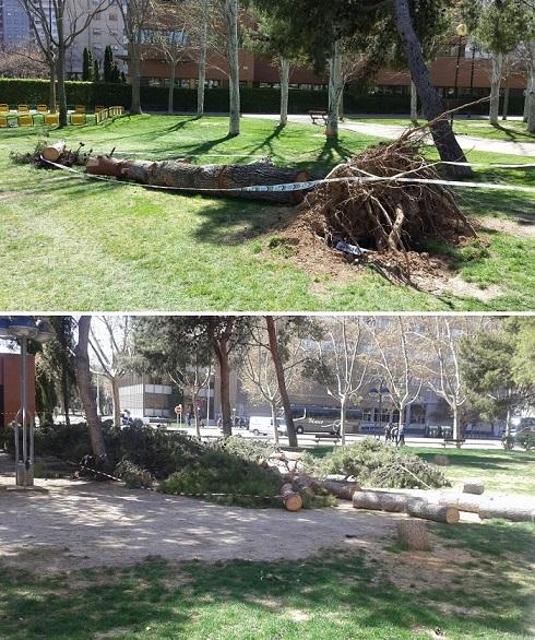 IU denuncia incumplimientos de FCC en la recogida de ramas y troncos en diversos puntos de Zaragoza