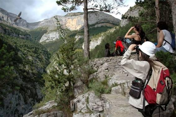Grupo de visitantes observando al quebrantahuesos en su medio natural.