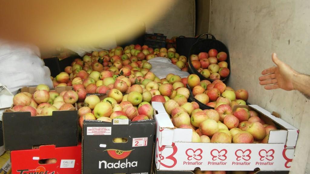 La RSP de Fraga recolecta 700 kgs. de manzana para colectivos sociales zaragozanos