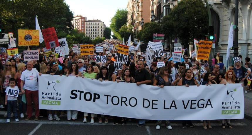 La Junta de Castilla y León prohíbe matar al Toro de la Vega pero no impide su celebración
