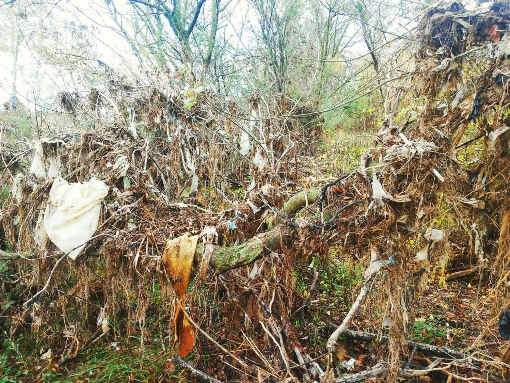 Continúa el estado de abandono del Soto de Cantalobos