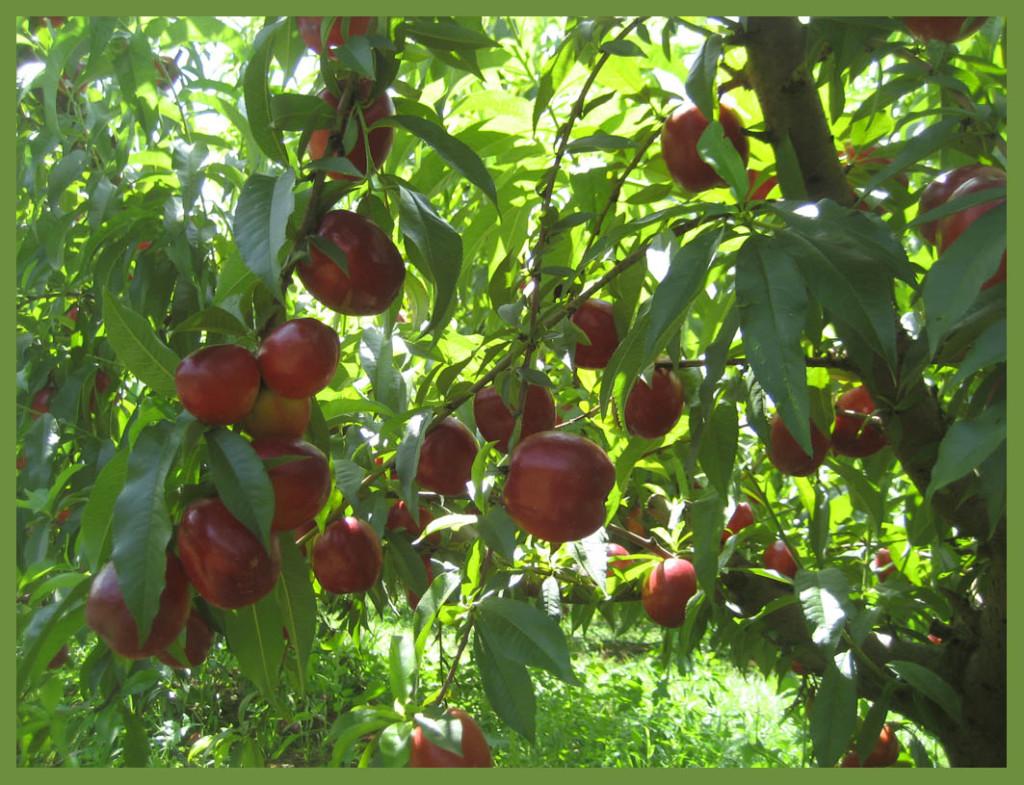 IV Congreso de Cooperativas Agro-alimentarias de Aragón