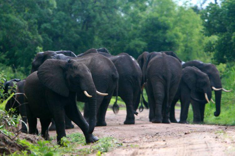WWF reclama medidas contundentes ante CITES para frenar el tráfico de especies