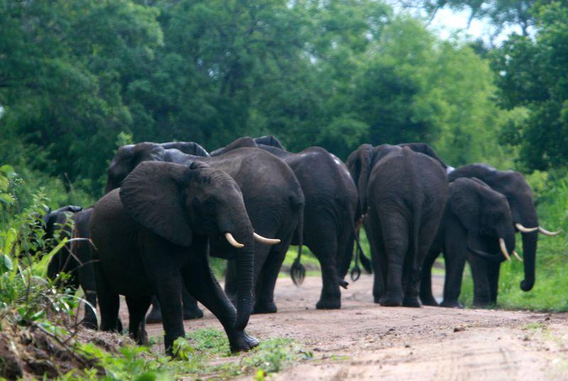 Elefantes en la reserva de Selous.