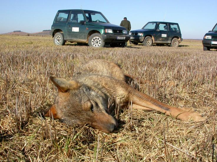 Miles de animales mueren envenenados cada año