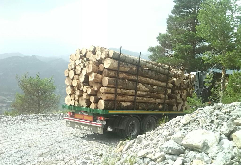 Denuncian la tala del abetal de la Sierra Ferrera en Laspuña