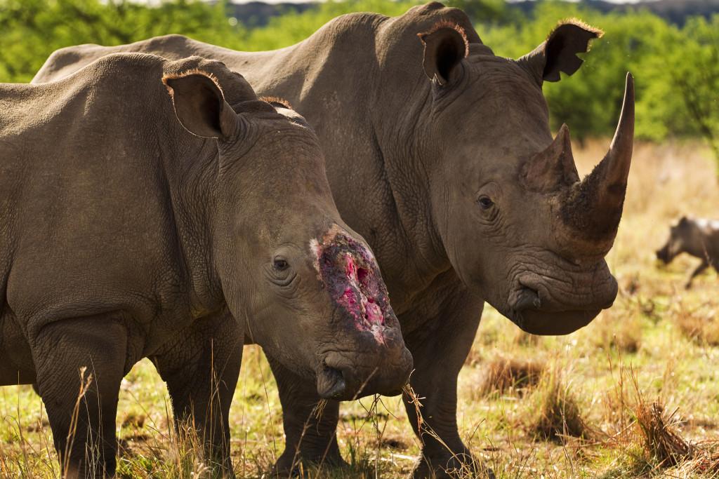 WWF celebra que el mundo tome fuertes medidas para la protección de la vida salvaje