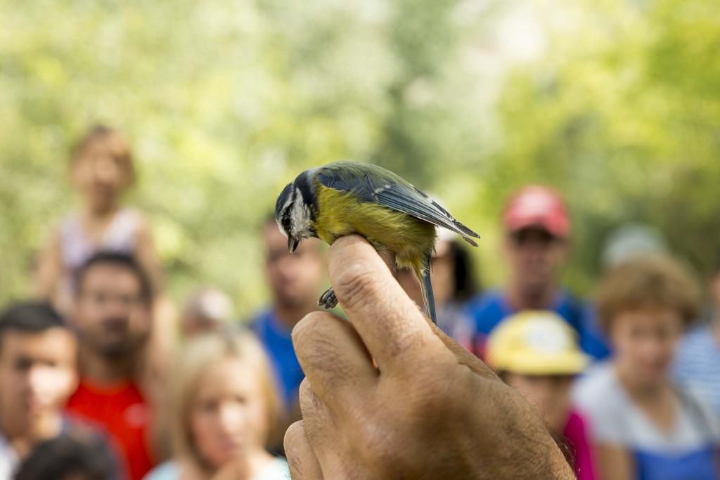 El Galacho de Juslibol celebra este domingo el Día Mundial de las aves migratorias