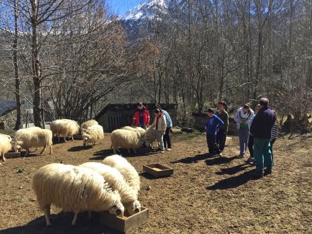 Denuncian incumplimiento del Gobierno de Aragón en el programa de formación de Bubal