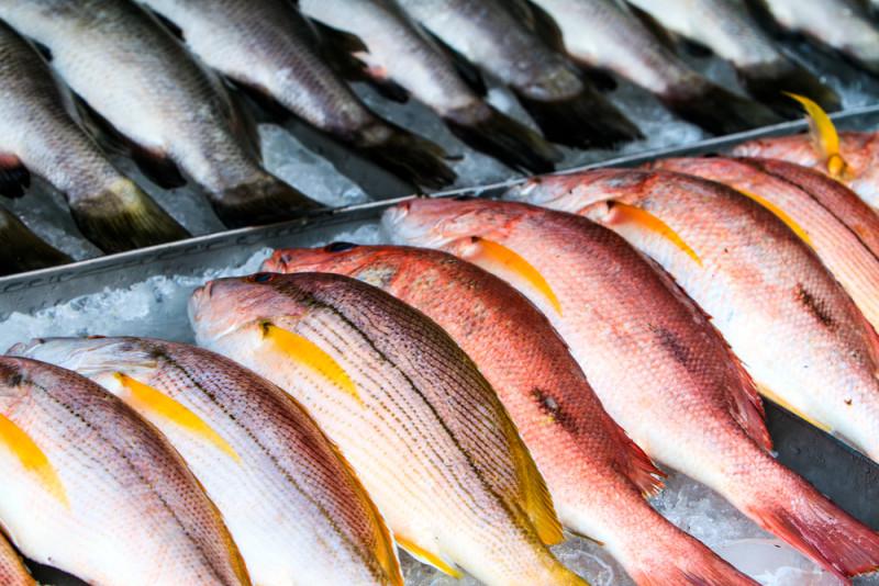 WWF lanza su nueva guía de consumo responsable de pescado en el Mediterráneo