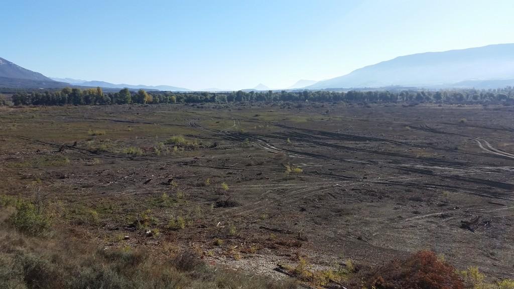 La Asociación Río Aragón denuncia la deforestación de más de 13 hectáreas de zona LIC en la cola del embalse de Yesa