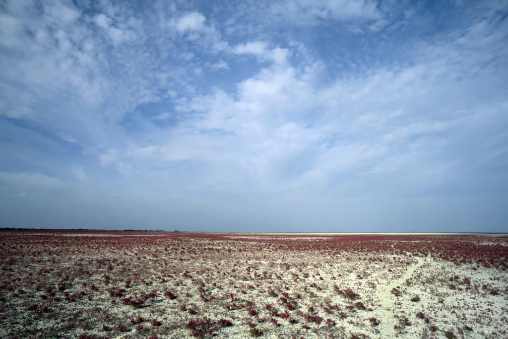Un informe confirma la crítica situación del agua en Doñana
