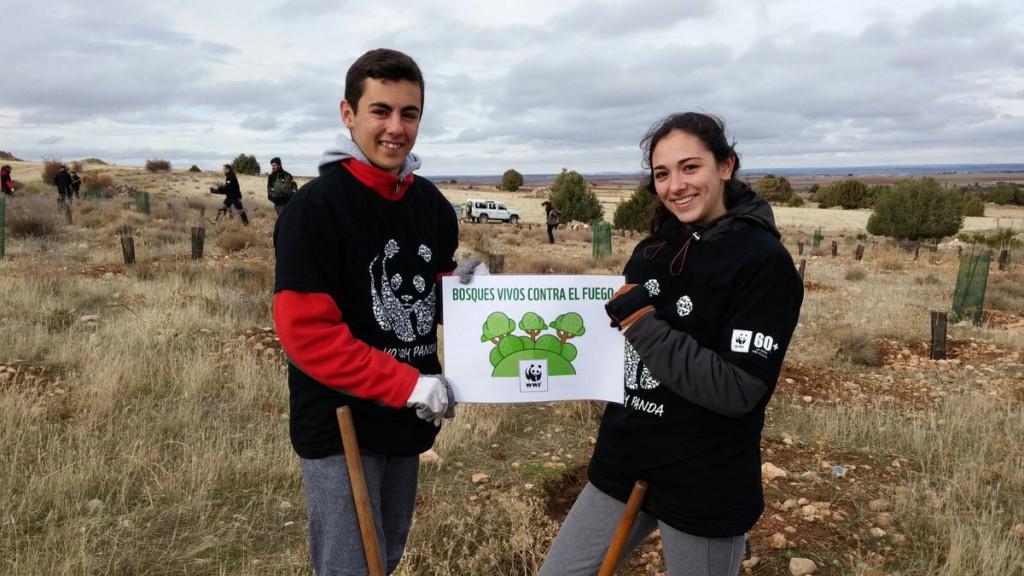 Los voluntarios de WWF piden acción contra los incendios plantando cientos de árboles