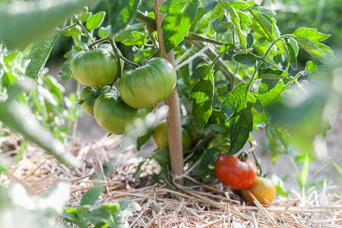 La agricultura agroecológica es la respuesta más efectiva para combatir los retos ambientales.