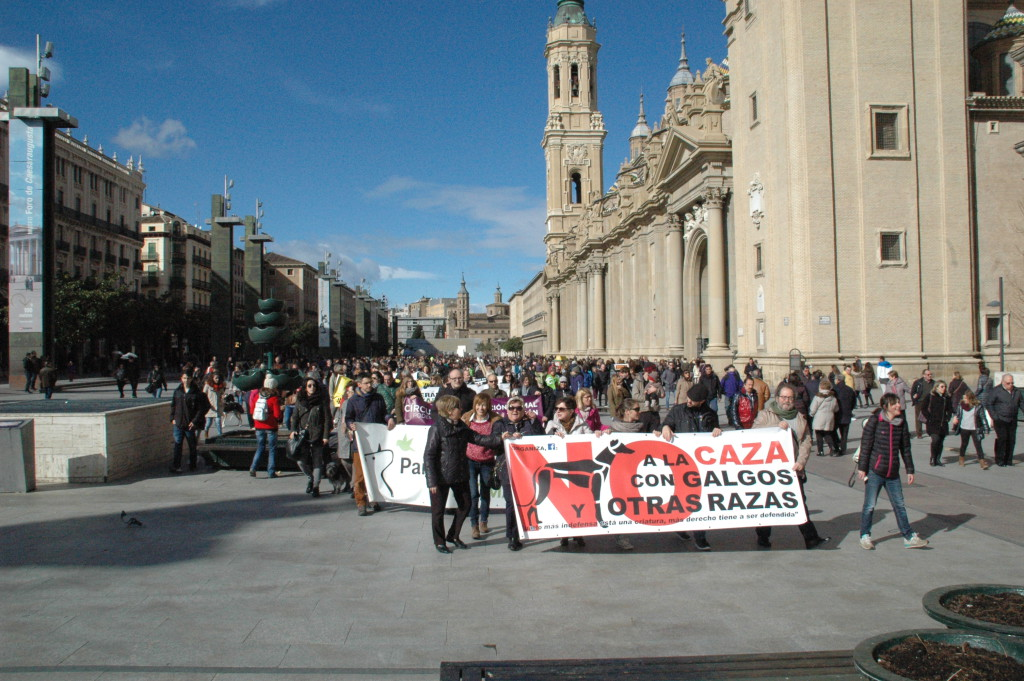 Zaragoza se moviliza en contra de la caza con galgos y perros de otras razas