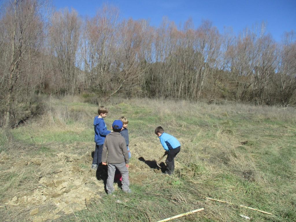Éxito de la plantación de caxicos y madroños para repoblar la zona de Morillo de Galligo