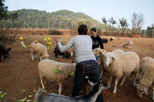 Hogar ProVegan presenta en Zaragoza un documental sobre animales víctimas de la explotación y el maltrato