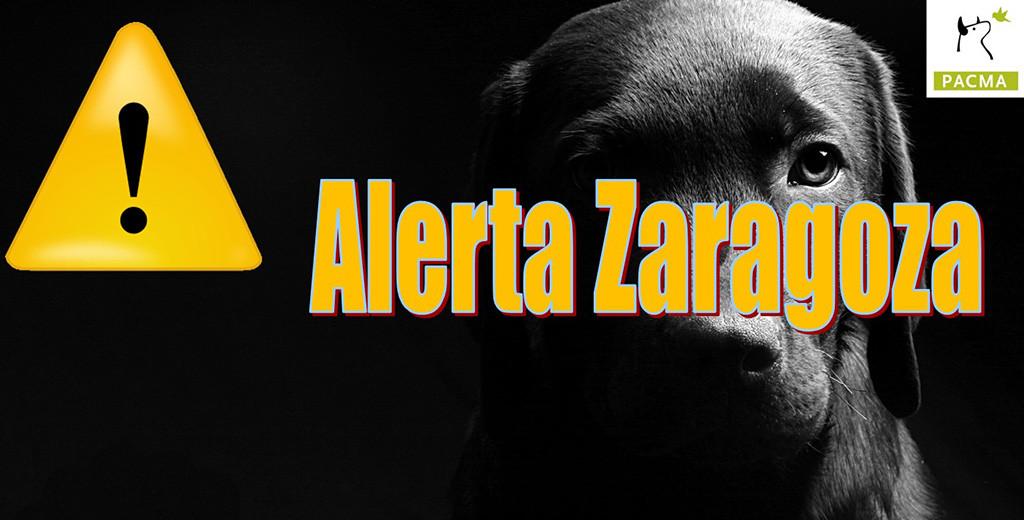 Cumple un año la página 'Alerta Zaragoza' creada por PACMA ante el aumento de envenenamientos de animales en parques