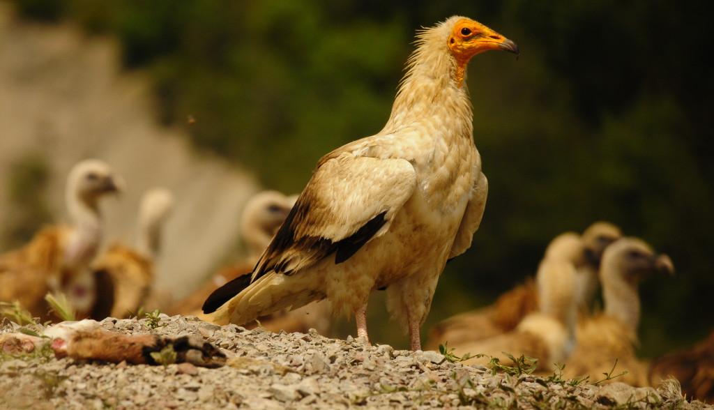 SEO/BirdLife celebra el Día de las Aves con más de 300 actividades