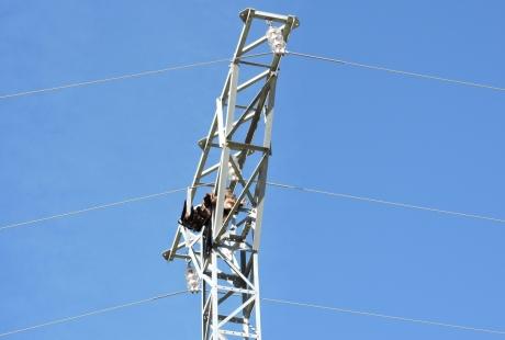 Agentes para la Protección de la Naturaleza de Teruel localizan dos águilas reales electrocutadas en Cantavieja