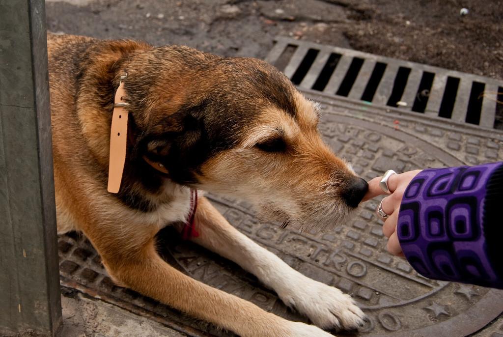 """Asociaciones animalistas convocan en Zaragoza una concentración en repulsa por la """"ejecución"""" de perros por parte de la Policía"""
