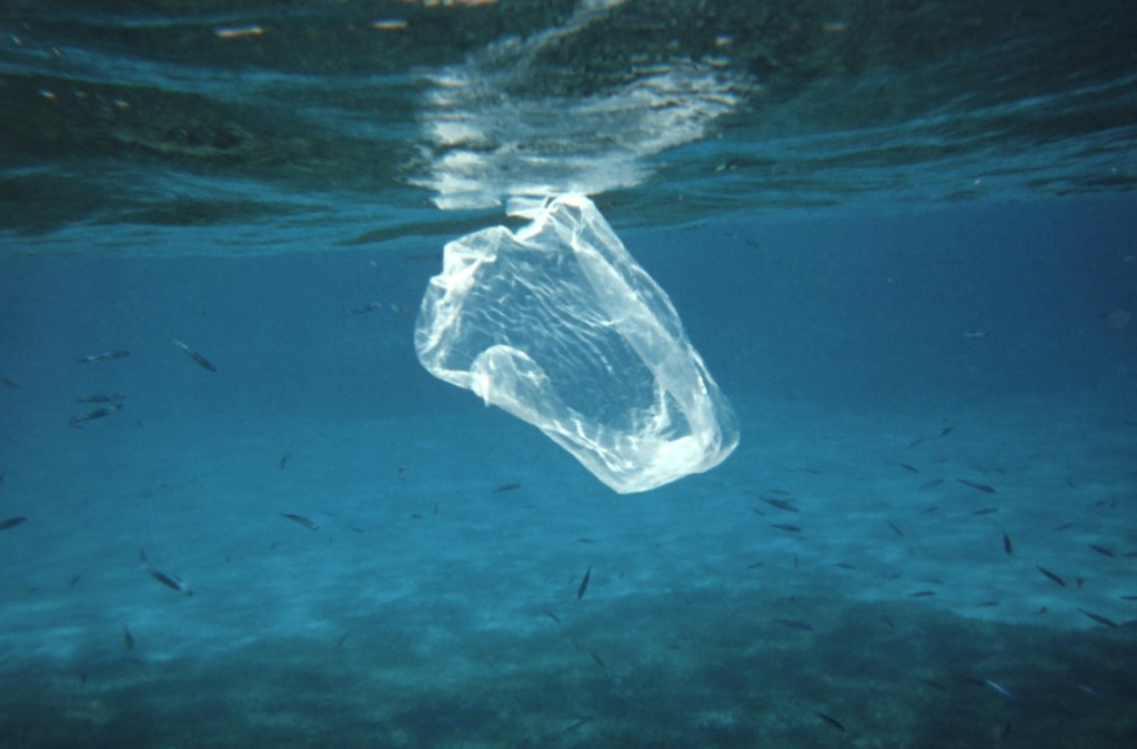 WWF pide al Gobierno español que prohíba la producción y consumo de plásticos innecesarios de un solo uso