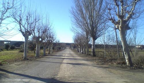 El Gobierno de Aragón licita la obra de refuerzo de firme y mejora de la carretera A-2219 de Alfarrás a Almacelles