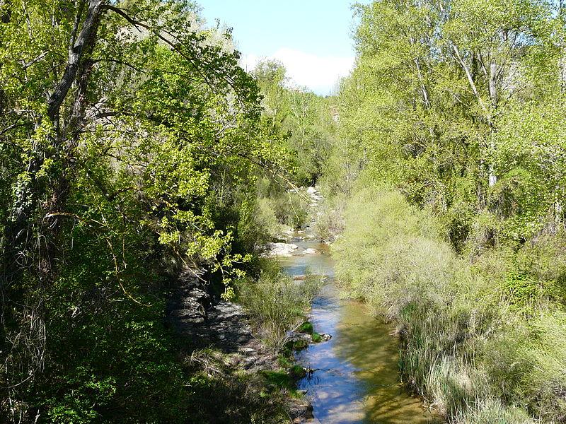 IU pedirá explicaciones al Ejecutivo aragonés sobre la mortandad de la fauna del río Mijares
