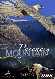 El Pirineo aragonés y el quebrantahuesos en la televisión japonesa