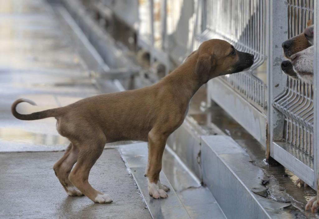 218 perros del Centro de recogida de la DPH disfrutan ya de una vida con sus nuevas familias