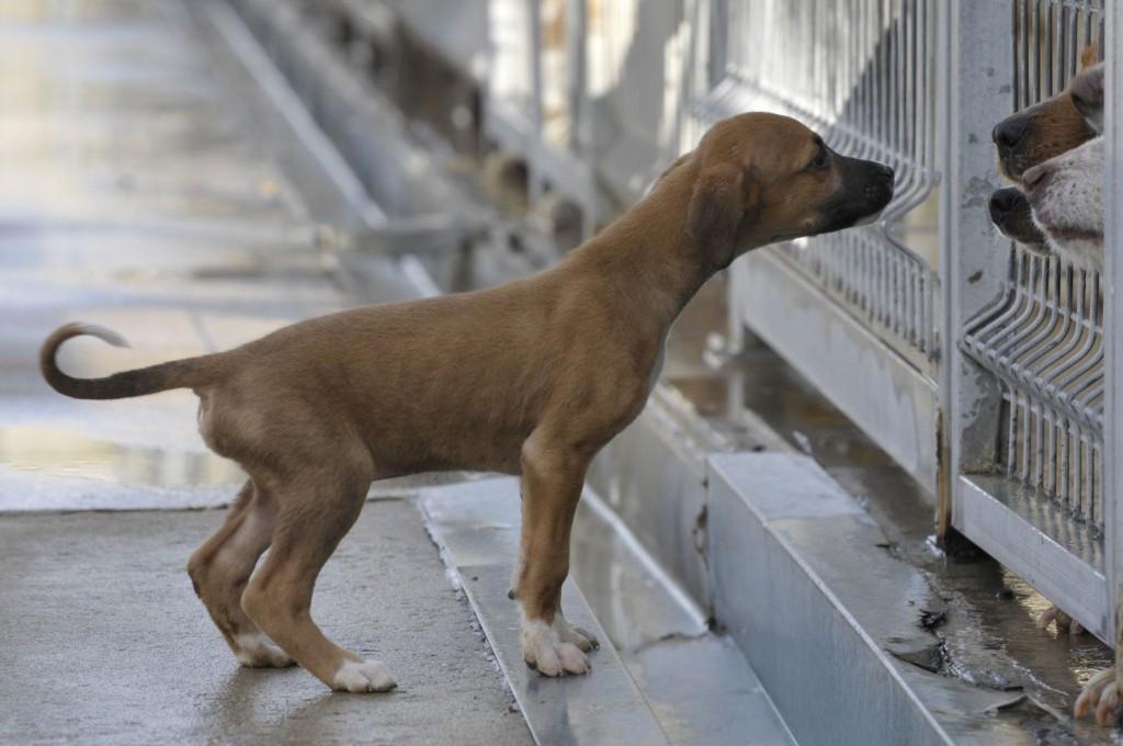 Adjudicada la construcción del nuevo Centro Municipal de Protección Animal en Zaragoza