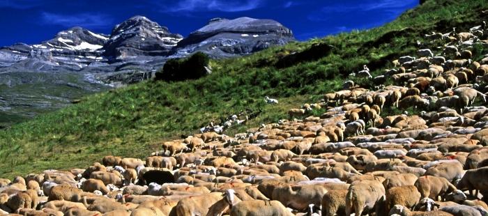 La Reserva de la Biosfera Ordesa-Viñamala coordina un grupo operativo de ganadería extensiva para el Pirineo