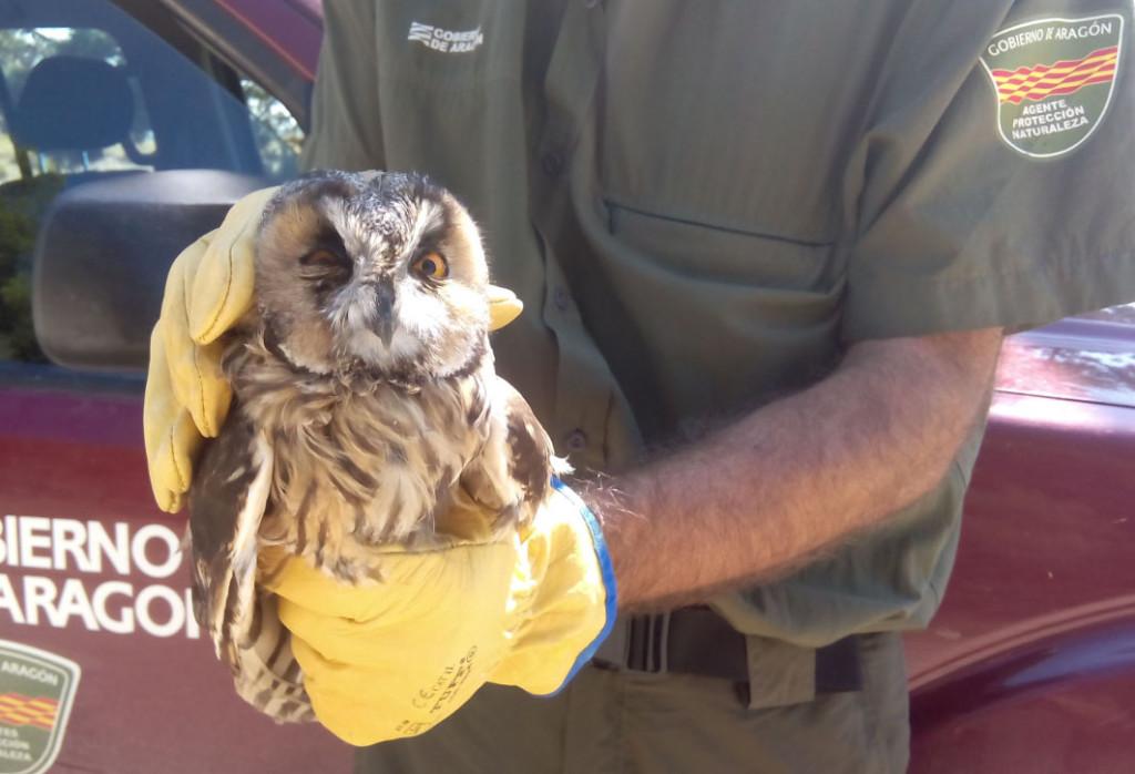 Más de 1.500 animales han pasado por L'Alfranca en lo que llevamos de año