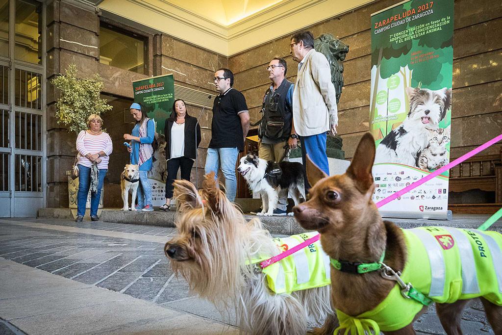 Vuelve Zarapeluda, el encuentro pro adopción y contra el maltrato animal