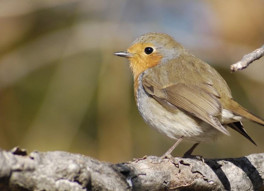 Los centros de la Red Natural de Aragón celebran el Día Mundial de las Aves